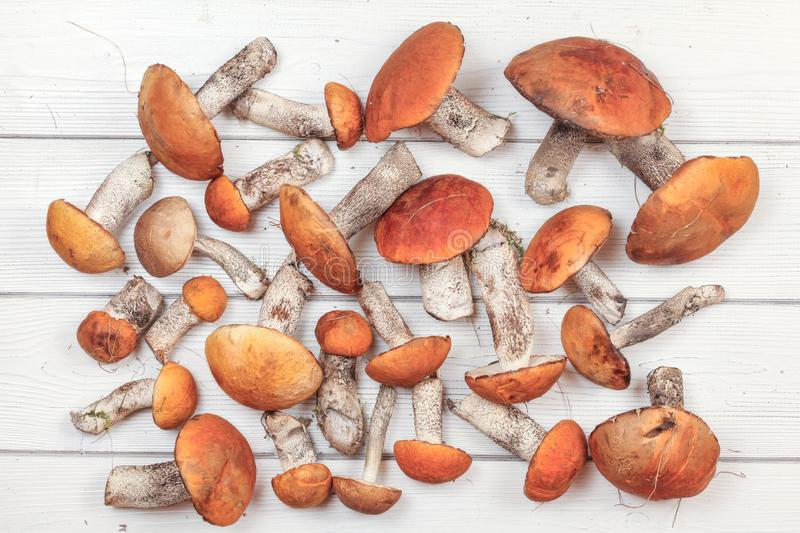 Tabletop view, freshly picked forest mushrooms, red-capped scaber stalk variety Leccinum aurantiacum / albostipitatum, on white. Boards desk stock images