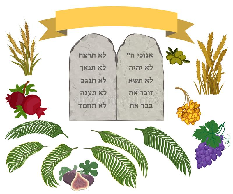 Tablettes de la pierre et de sept espèces réglées illustration stock