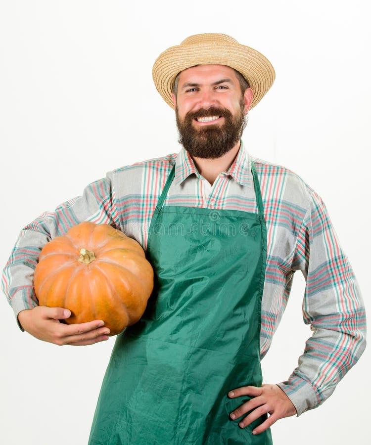 Tablier rustique barbu d'usage d'agriculteur d'homme présentant à potiron le fond blanc Graines engrais et récolte d'agriculture photos libres de droits