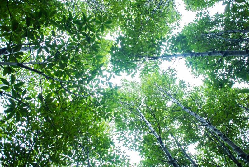 Taboon växtskog royaltyfri bild
