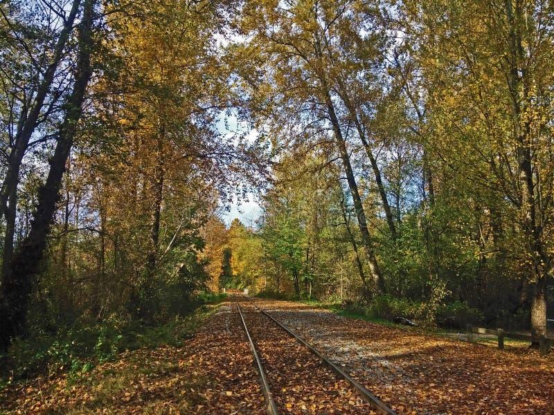 Taborowy ślad iść daleko od Jesień spadać złoci liście Spadku parkowy las obraz royalty free