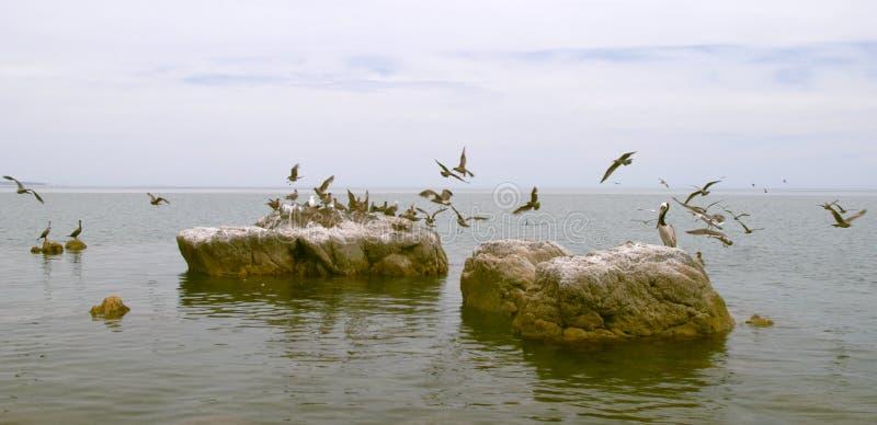 tabunowi ptaki zdjęcia royalty free