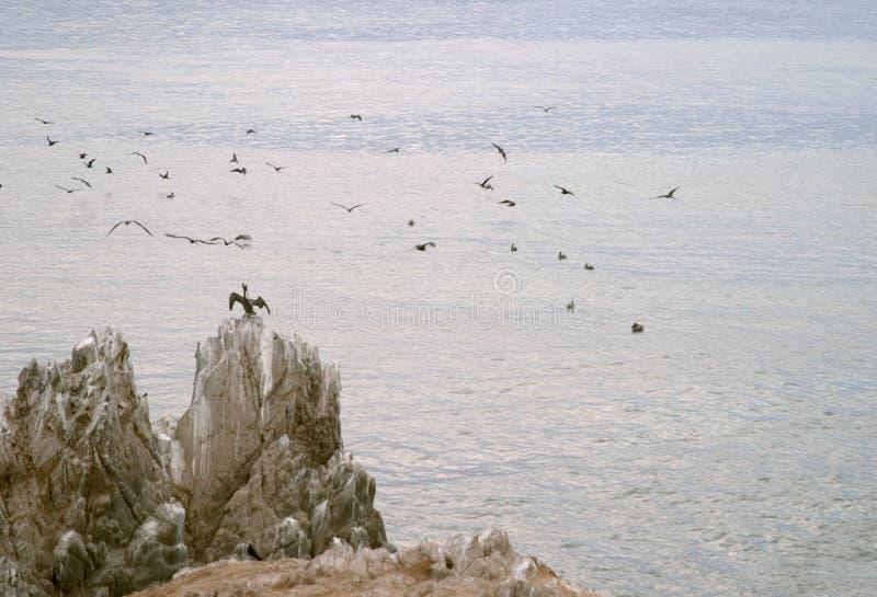 tabunowi ptaki obraz stock