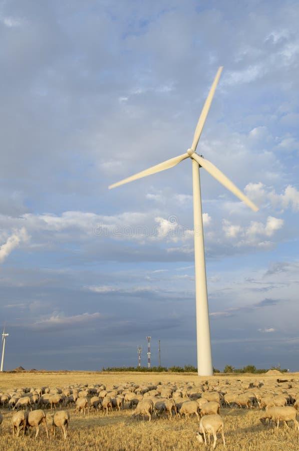 tabunowi wiatraczki zdjęcie royalty free