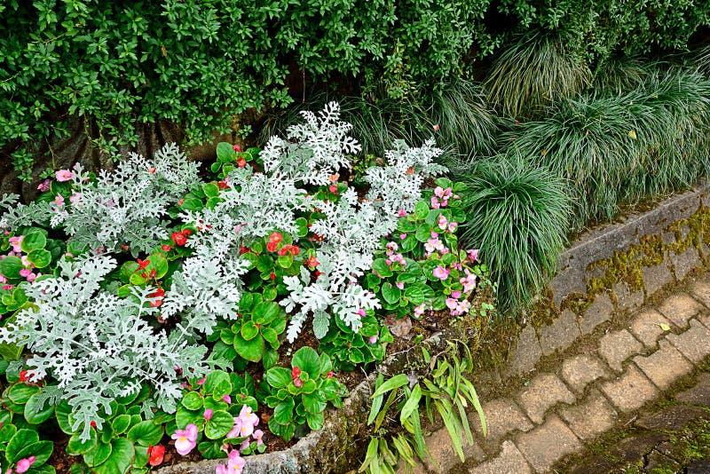 Taca ogród obraz stock
