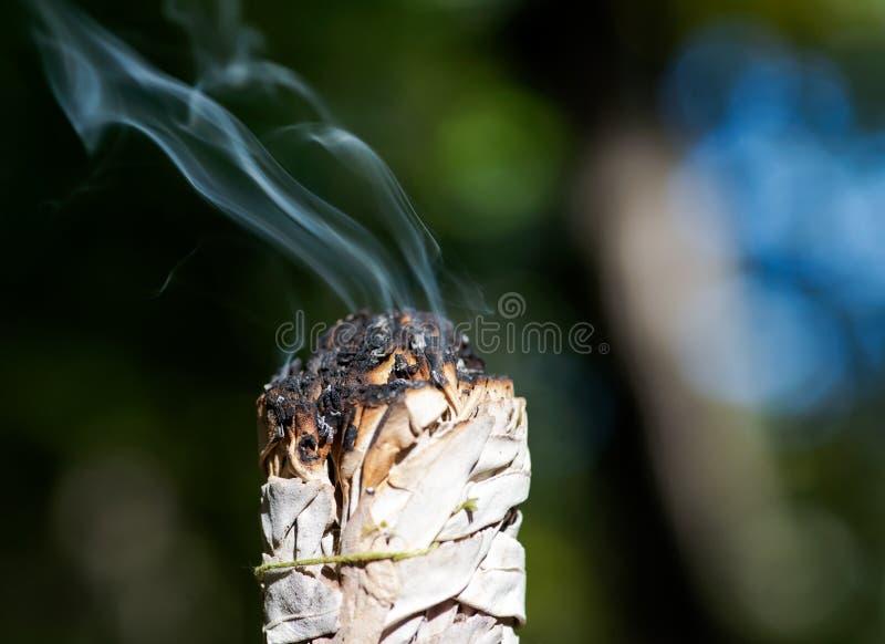 Tachant le rituel utilisant brûler le paquet feuillu épais de sauge blanche dans la forêt photo libre de droits