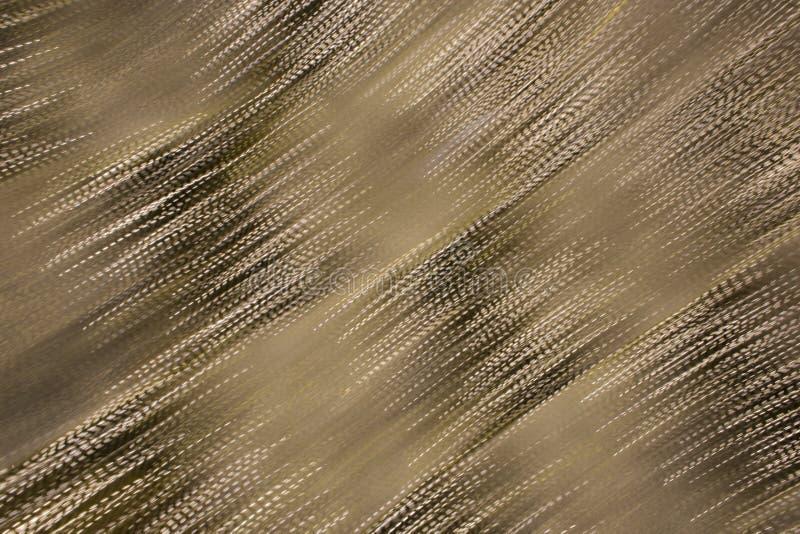 Tache floue diagonale de profil sous convention astérisque photographie stock