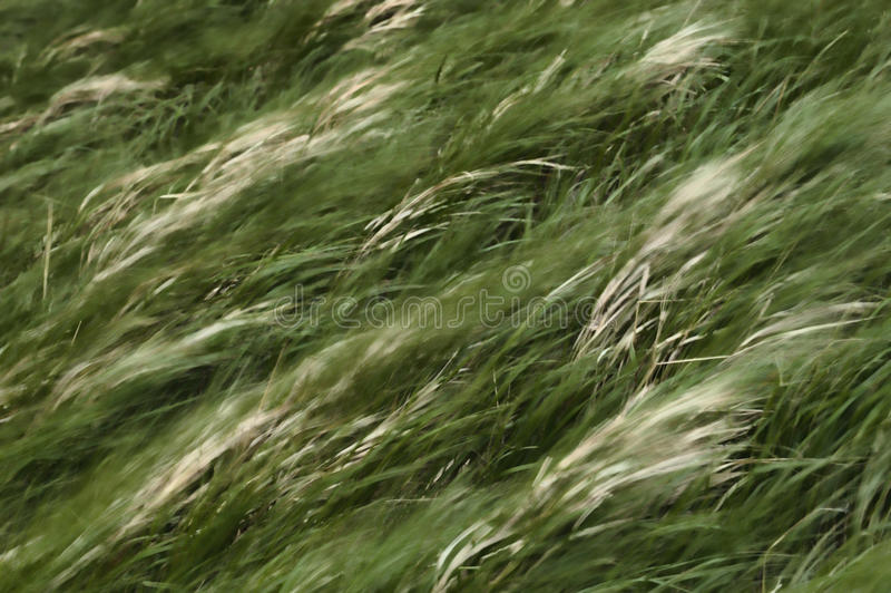 Tache floue mobile d'herbe photo stock