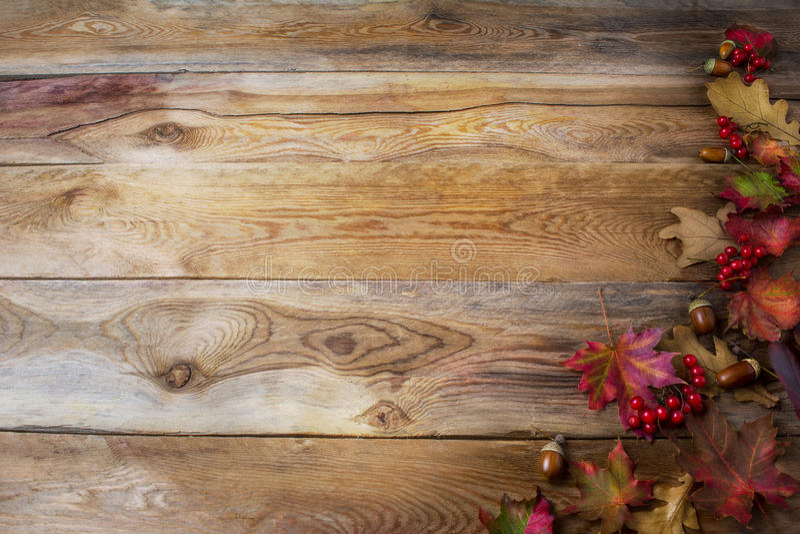 Tacksägelsehälsningbakgrund med bär, ekollon och nedgång M arkivfoto