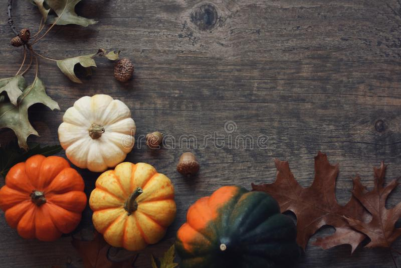 Tacksägelsesäsongstilleben med färgrika små pumpor, ekollonsquash och nedgångsidor över lantlig wood bakgrund arkivfoto