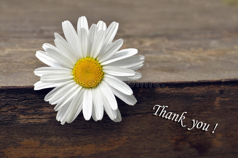 Tacksamhet - tacka dig royaltyfria bilder