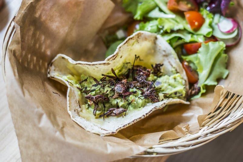 Taco délicieux avec le guacamole et chapulines accompagnés d'une salade verte image stock
