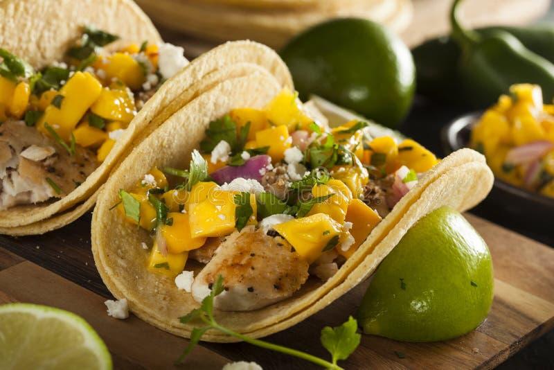 Tacos de peixes caseiros de Baja fotografia de stock royalty free