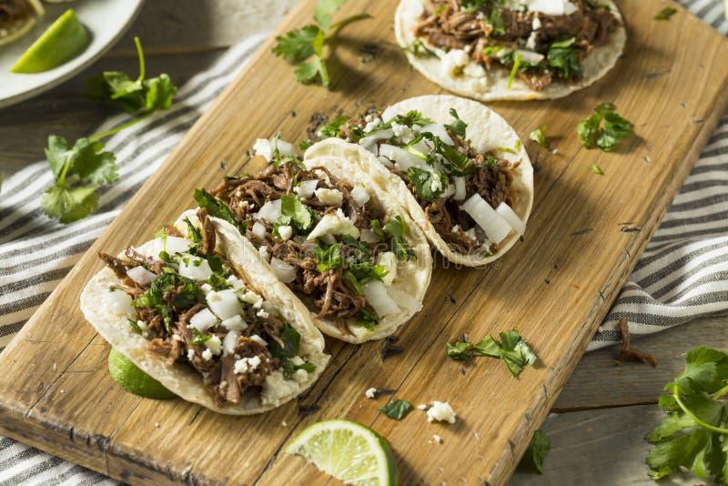 Tacos fait maison épicé de Barbacoa de boeuf images stock