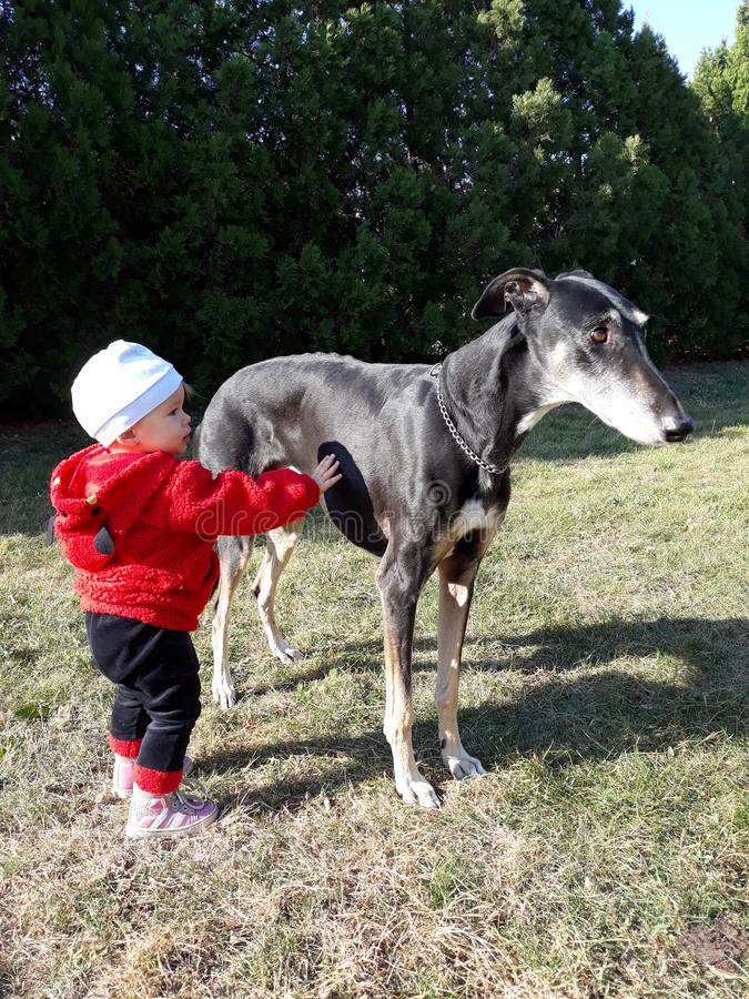 Tacto apacible de un bebé y de un perro foto de archivo libre de regalías