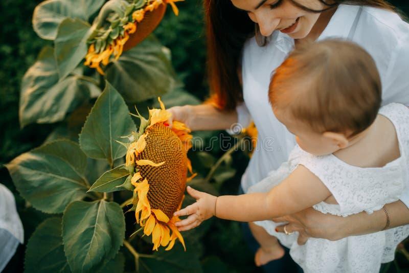 Tactos del bebé a la inflorescencia del girasol foto de archivo