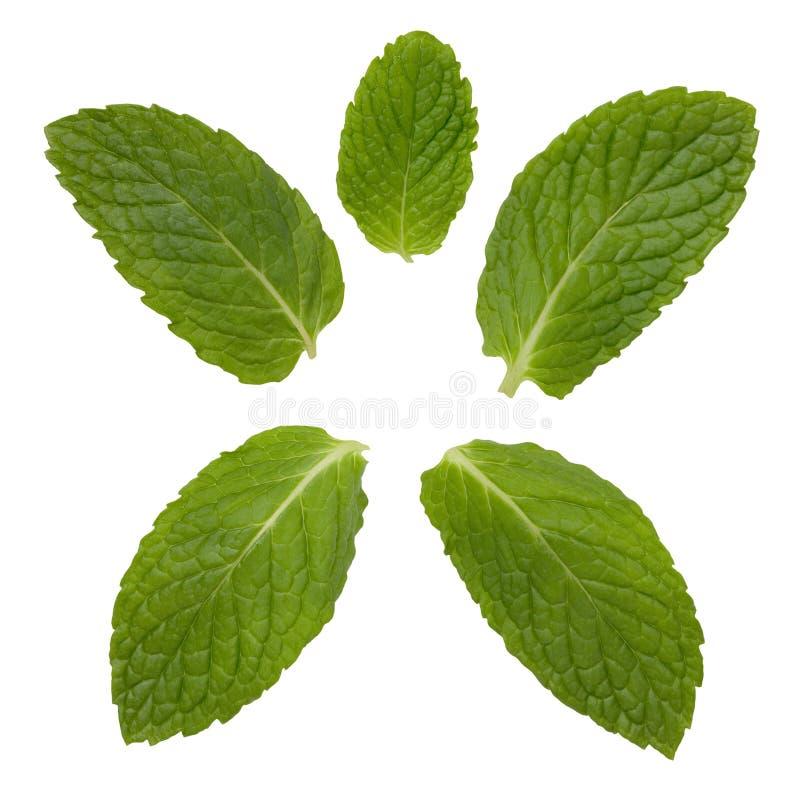 Tadellose Blätter lizenzfreie stockfotografie