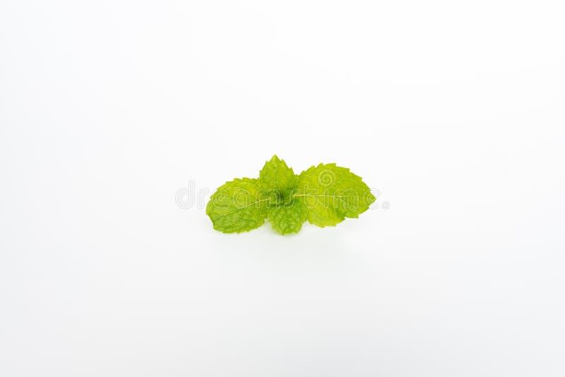 Tadellose Blätter auf weißem Hintergrund lizenzfreies stockfoto