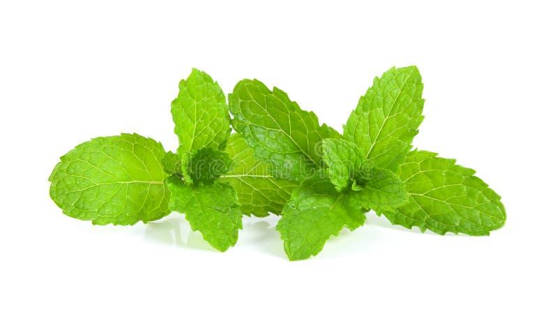Tadellose Blätter lokalisiert auf weißem Hintergrund lizenzfreies stockbild