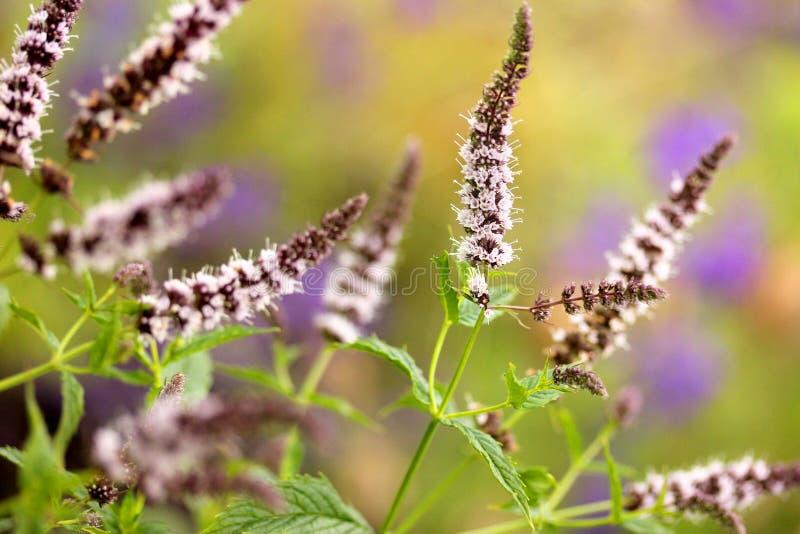 Tadellose Blüte stockfotos