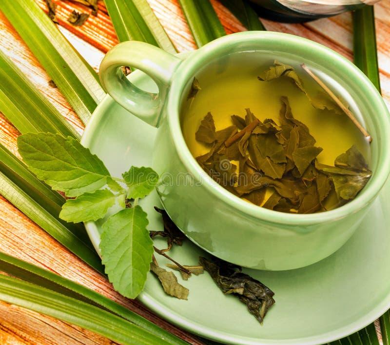 Tadelloser grüner Tee bedeutet Café Herb And Refresh stockfoto