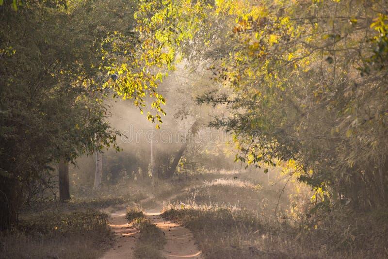 Tadoba Safari. Tadoba national park and tiger reserve, Chandrapur, India stock photo
