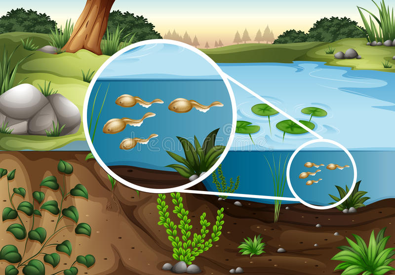 Tadpoles swimming in the pond stock illustration