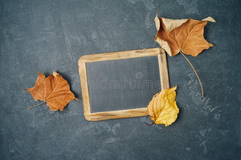 Tafel und Herbstlaub über Tafelhintergrund stockbilder