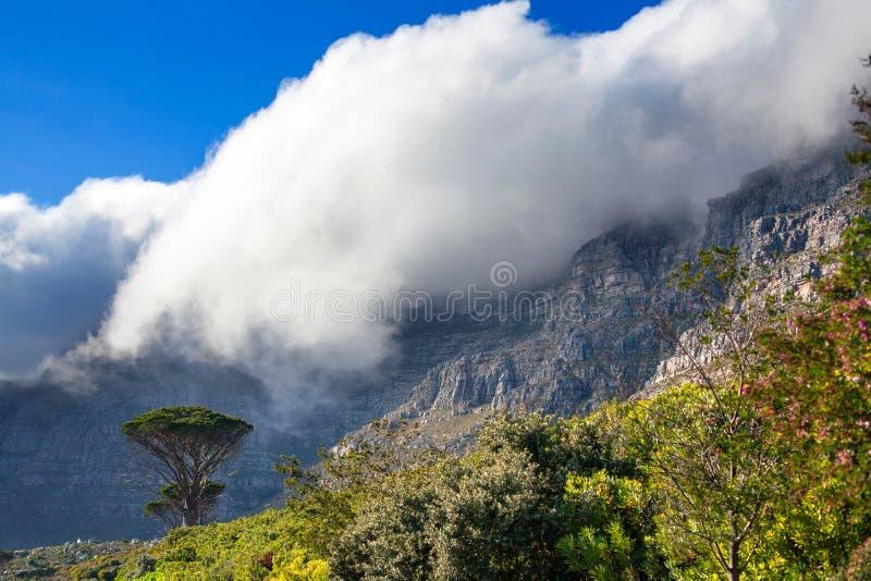 Tafelberg und grüne Bäume unter einer enormen weißen Wolke, Hintergrund des blauen Himmels, Cape Town, Südafrika stockbild