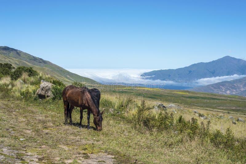 Tafi delValle sjö i Tucuman, Argentina. arkivfoto