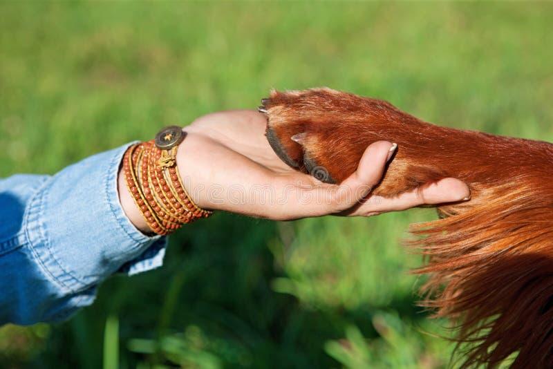 Tafsar den hållande hunden för den mänskliga handen royaltyfri bild