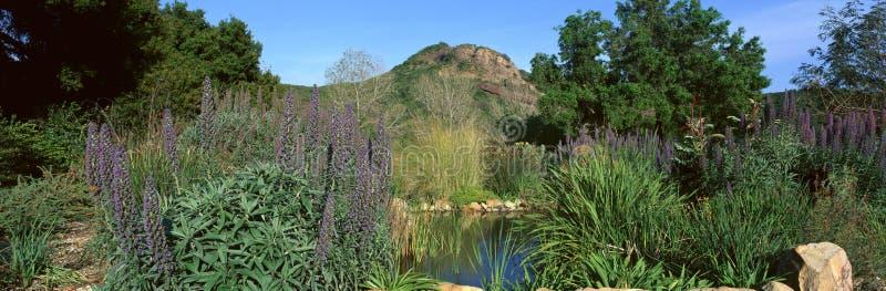 Taft trädgårdar royaltyfria bilder