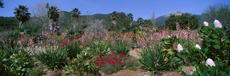 Taft trädgårdar arkivbild