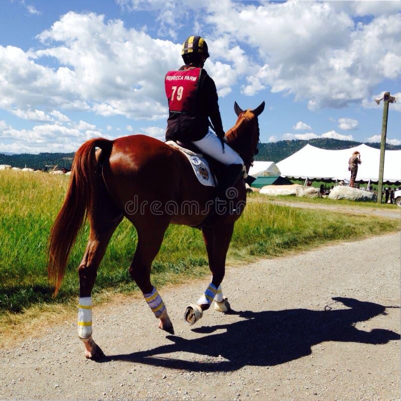 Tag an den Pferderennen stockbilder