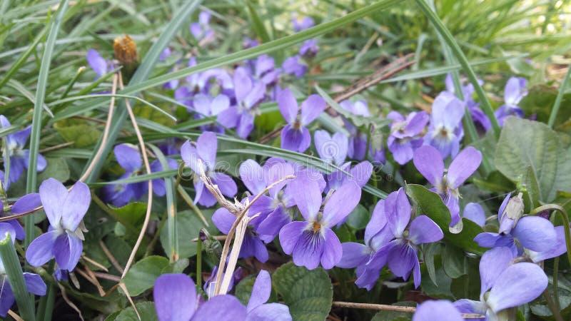 1. Tag des Frühlinges stockfoto