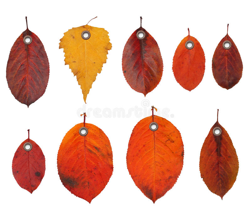 Tag label autumn leaves royalty free stock images
