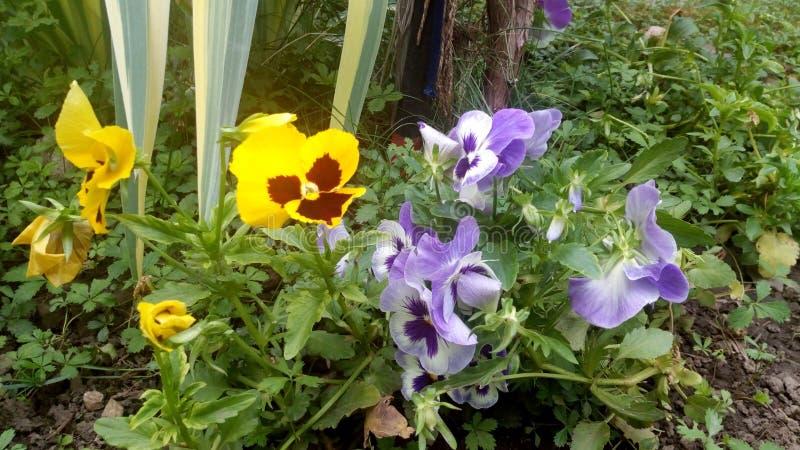 Tag und Nacht Blumen im Garten stockbild