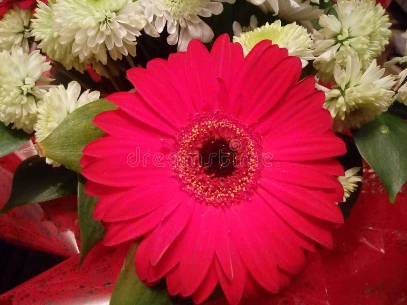 Tagen av makro av scharlakansrött, röd blomma royaltyfri fotografi