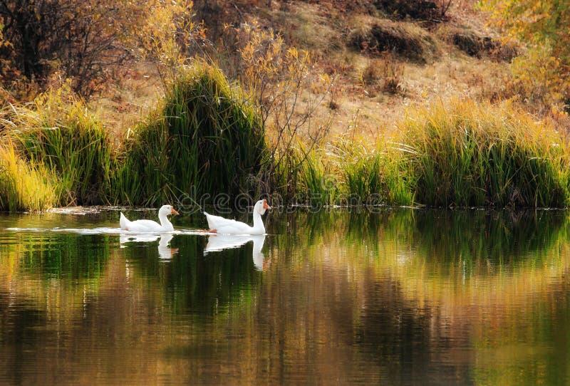 Tagesansicht der Herbstszene in kleinem Teich lizenzfreies stockfoto