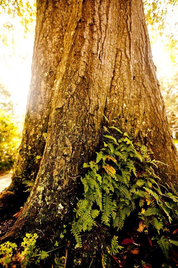 Tageslicht, das einen Baum schlägt lizenzfreies stockfoto