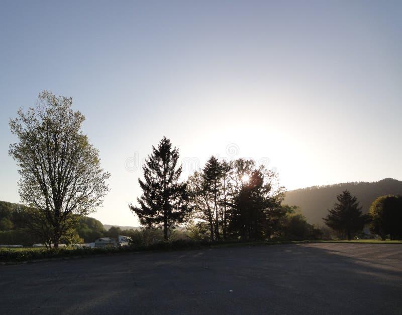 Tageslicht durch die Bäume stockfotos