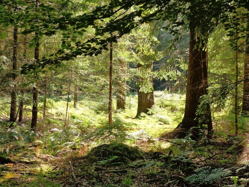 Tageslicht durch die Bäume lizenzfreie stockfotos