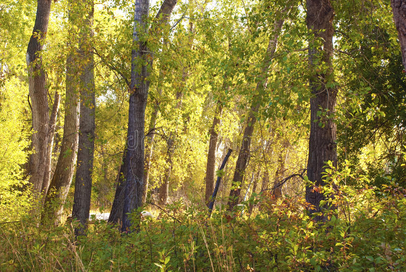 Tageslicht-Gefüllter Wald stockfotos