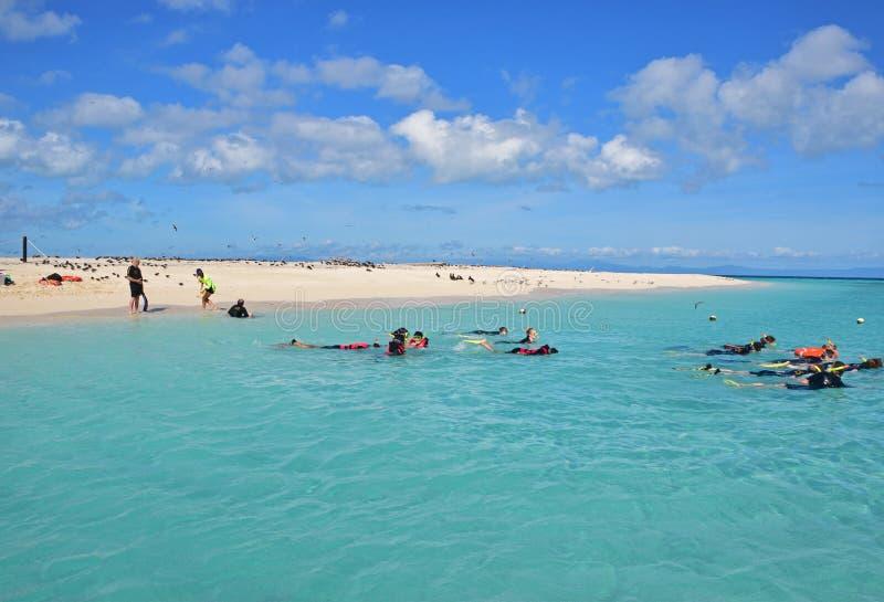 Tagesreisetourist, der in michaelmas Cay mit schönem feinem weißem blauem Wasser des Sandes und des Türkises schnorchelt lizenzfreies stockbild