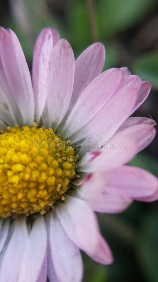 Tageszeit der frischen Blume lizenzfreie stockbilder