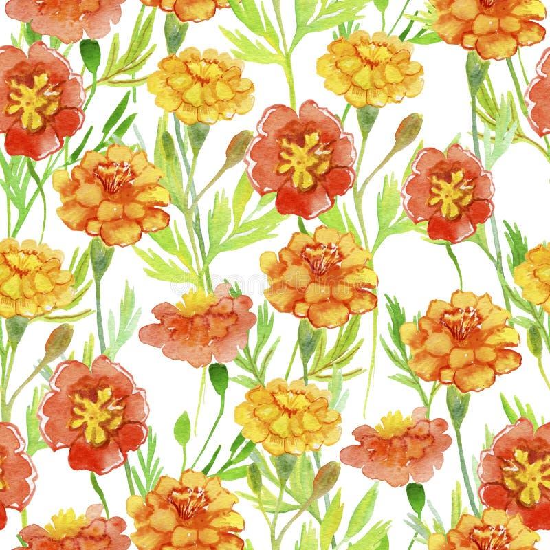 Tagete arancio isolato Fiori arancioni con i fogli verdi Pittura senza cuciture dell'acquerello illustrazione di stock