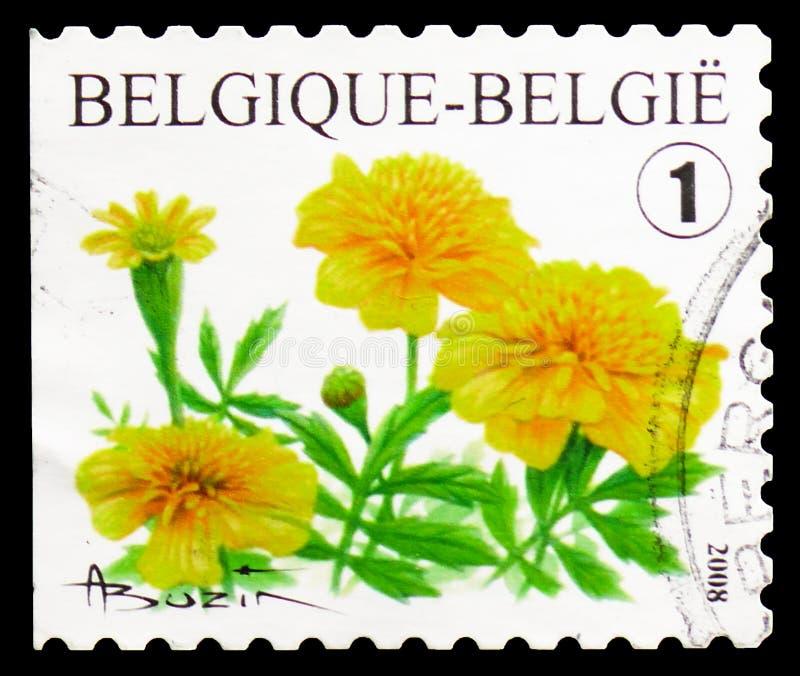 Tagetes-portula Selfadh Links nicht perforiert, Blumen serie, circa 2008 stockfotografie