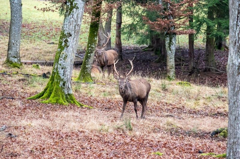 Tagga i skogen royaltyfria foton
