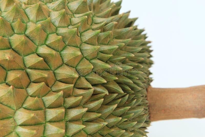 Taggar av durianfrukt arkivbilder