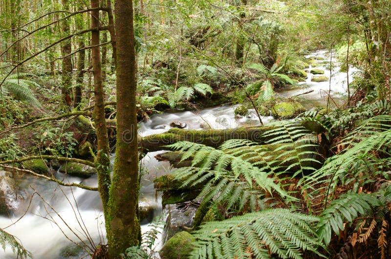 taggerty ποταμών στοκ φωτογραφίες με δικαίωμα ελεύθερης χρήσης